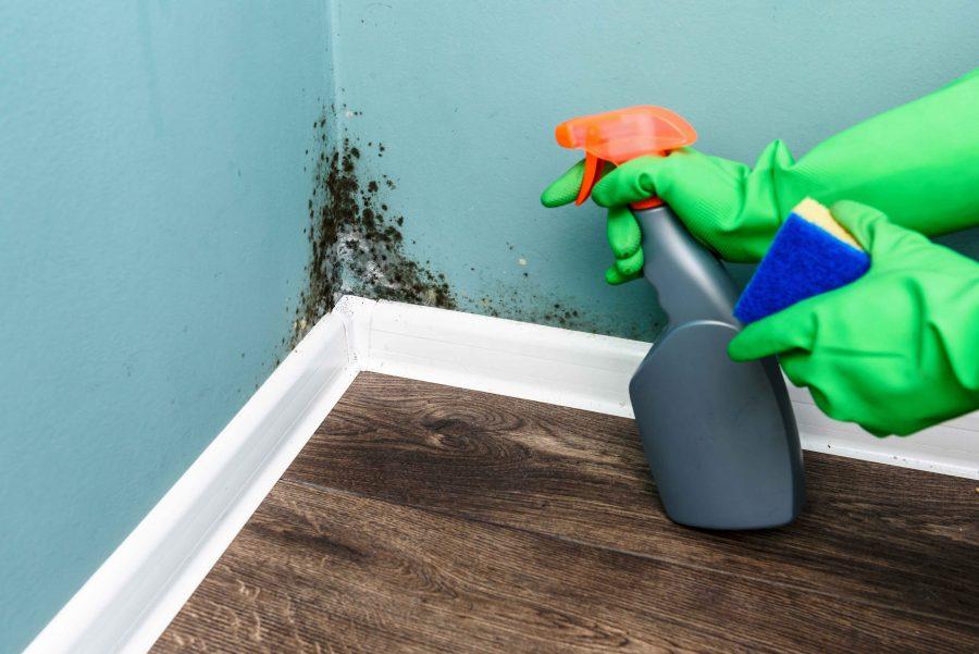 pelėsis namuose - grindinis šildymas